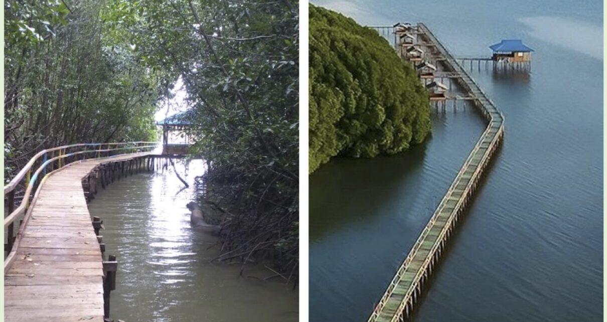 Wisata hutan manggrove libsangaj